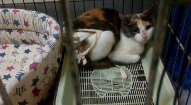 Прошу помощи в оплате стерилизации кошки