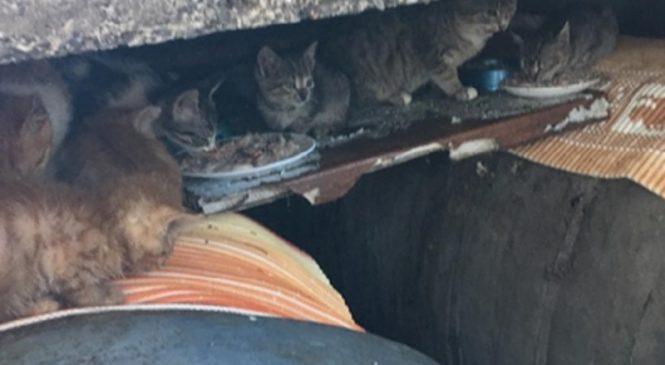 Cвалка из брошенных бездомных котят появилась в Сочи