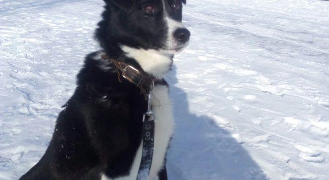 Ищет дом приютский пес