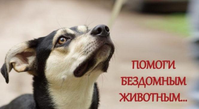 6 способов помочь бездомным животным