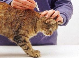 Как вывести блох у кошки или котенка