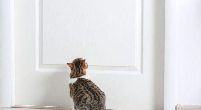 Как кошка узнает о приходе хозяев?