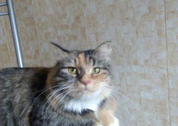 Ищет дом бывшедомашняя кошка